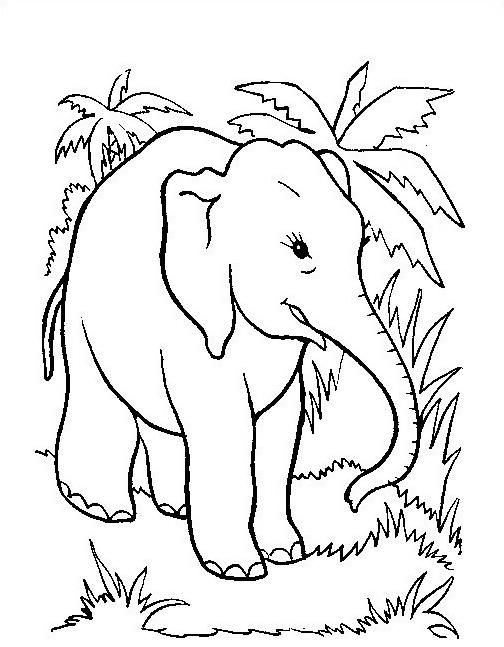Elefante da colorare 28