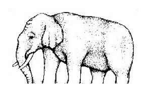 Elefante da colorare 36