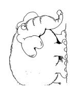 Elefante da colorare 51