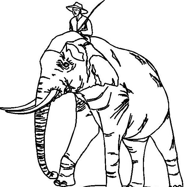 Elefante da colorare 53
