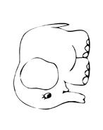 Elefante da colorare 58