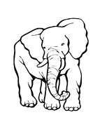 Elefante da colorare 61