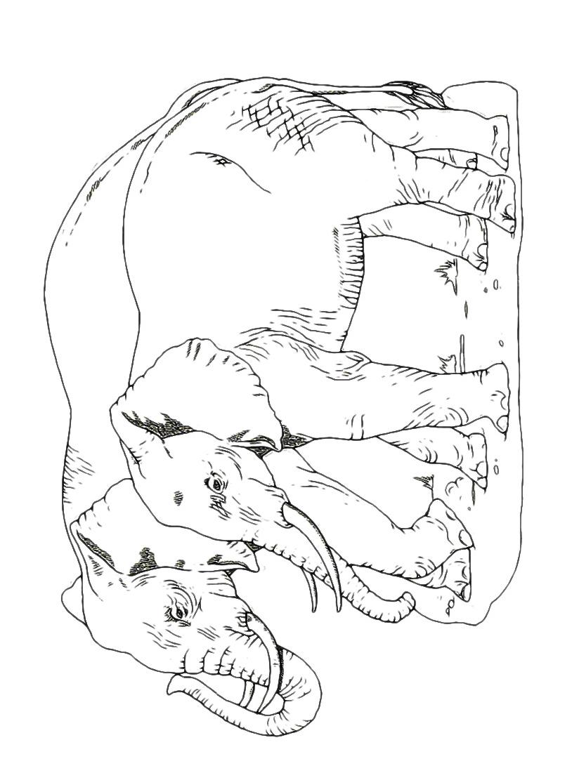 Elefante da colorare 65