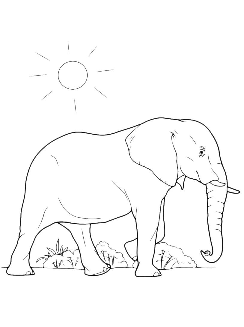 Elefante da colorare 70