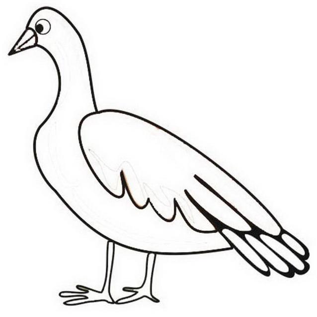 Uccello da colorare 134