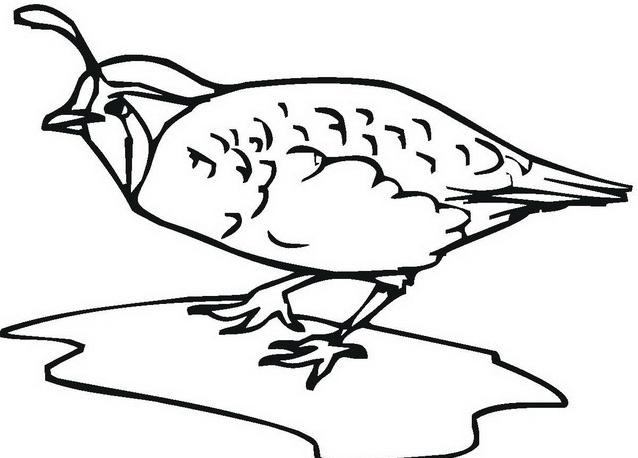 Uccello da colorare 135