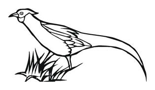 Uccello da colorare 136