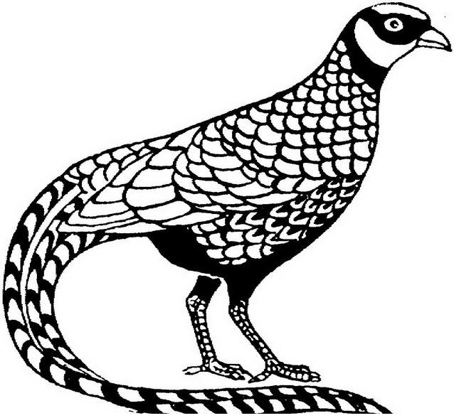 Uccello da colorare 137