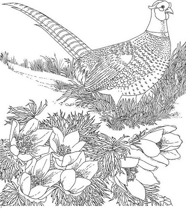 Uccello da colorare 138