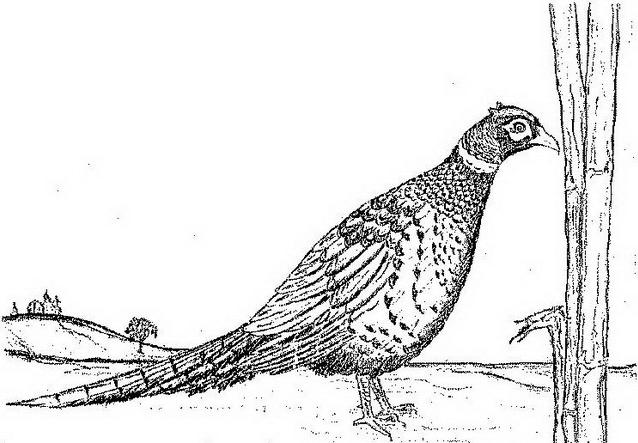 Uccello da colorare 139