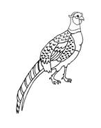 Uccello da colorare 140