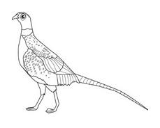 Uccello da colorare 141