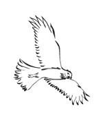Uccello da colorare 142