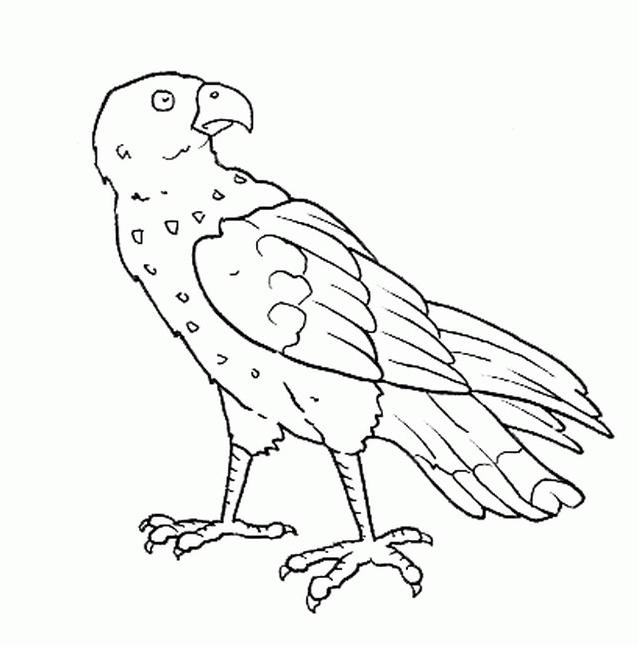 Uccello da colorare 143
