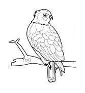Uccello da colorare 144