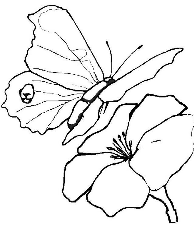 Farfalla da colorare 22