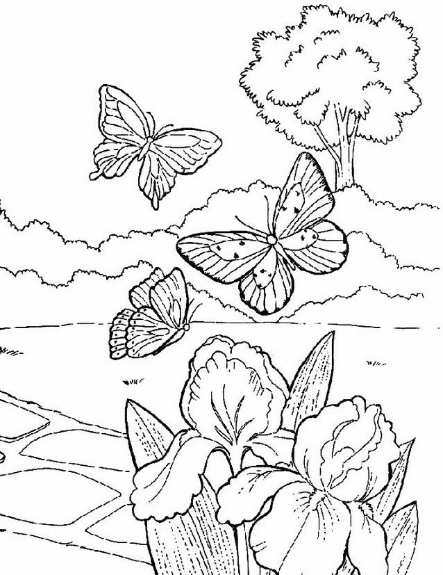 Farfalla da colorare 25