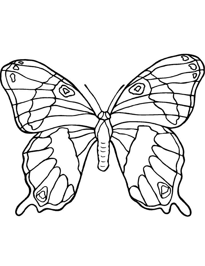 Farfalla da colorare 32