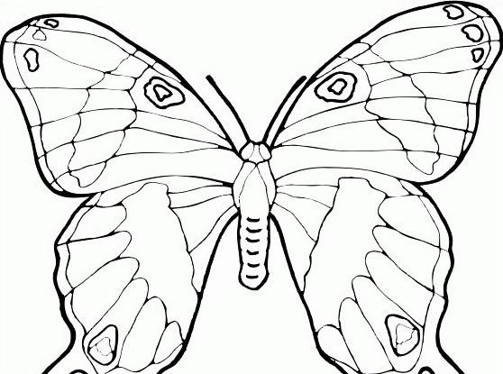 Farfalla da colorare 52