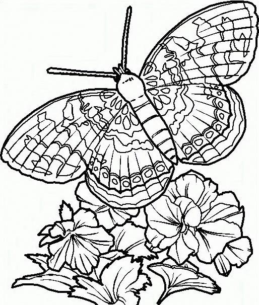 Farfalla da colorare 55