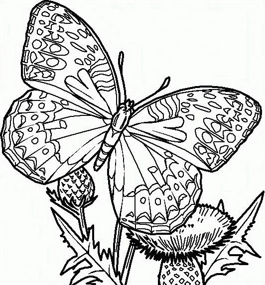 Farfalla da colorare 56