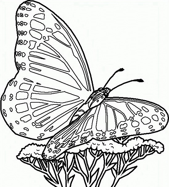 Farfalla da colorare 57