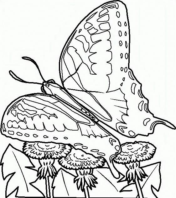 Farfalla da colorare 58