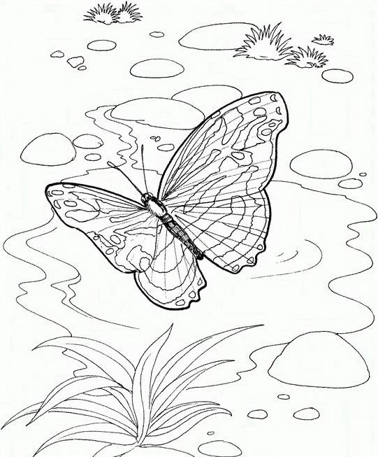 Farfalla da colorare 60