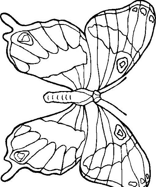 Farfalla da colorare 62