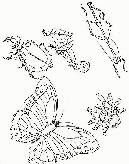 Farfalla da colorare 63