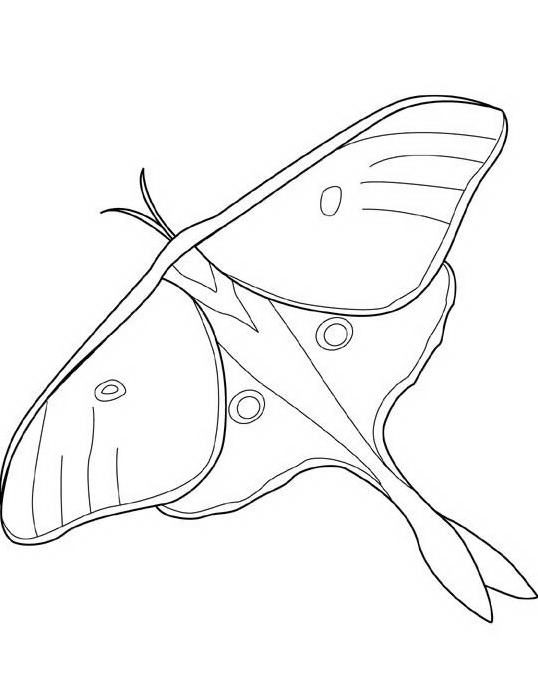 Farfalla da colorare 74