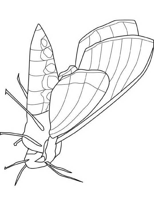 Farfalla da colorare 76