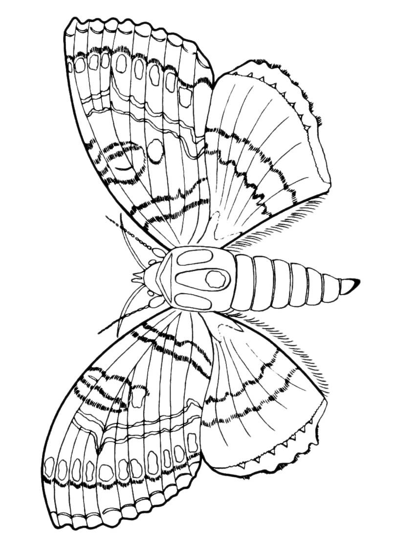 Farfalla da colorare 77