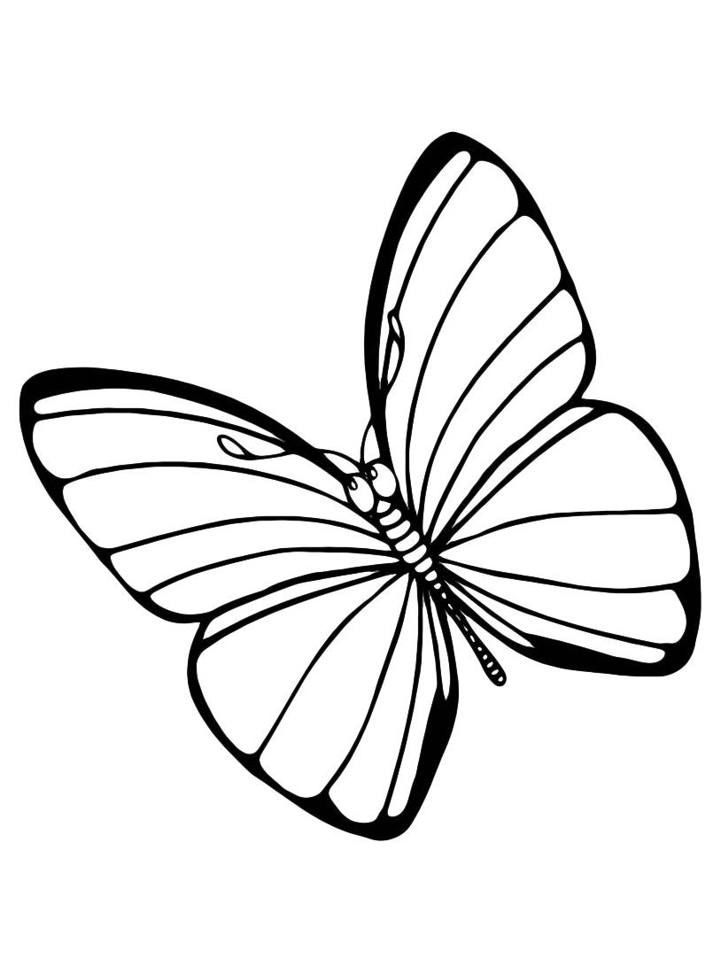 Farfalla da colorare 82
