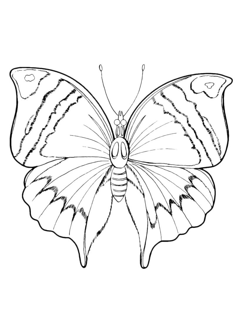Farfalla da colorare 94