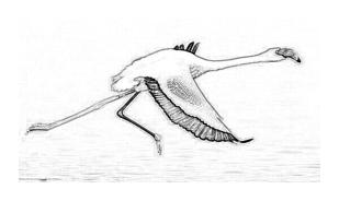 Uccello da colorare 146