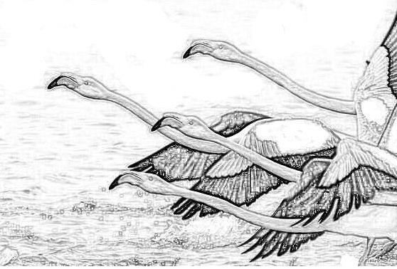Uccello da colorare 147