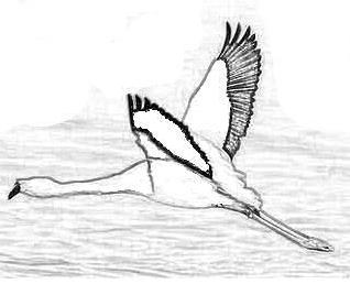 Uccello da colorare 148