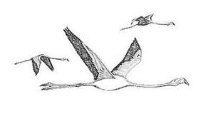Uccello da colorare 149