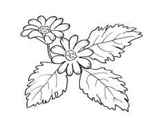 Fiore da colorare 27