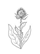 Fiore da colorare 28