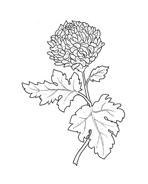 Fiore da colorare 29