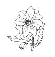 Fiore da colorare 30