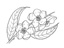 Fiore da colorare 31