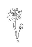 Fiore da colorare 32