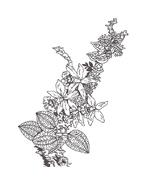 Fiore da colorare 36
