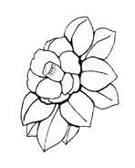 Fiore da colorare 41