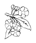 Fiore da colorare 44