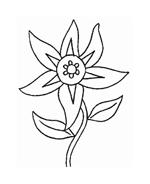 Fiore da colorare 46