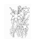 Fiore da colorare 47